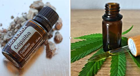 Copaiba vs. Kannabisz olaj